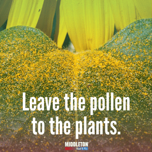 Leave the Pollen to the Plants. Middleton Heat and Air